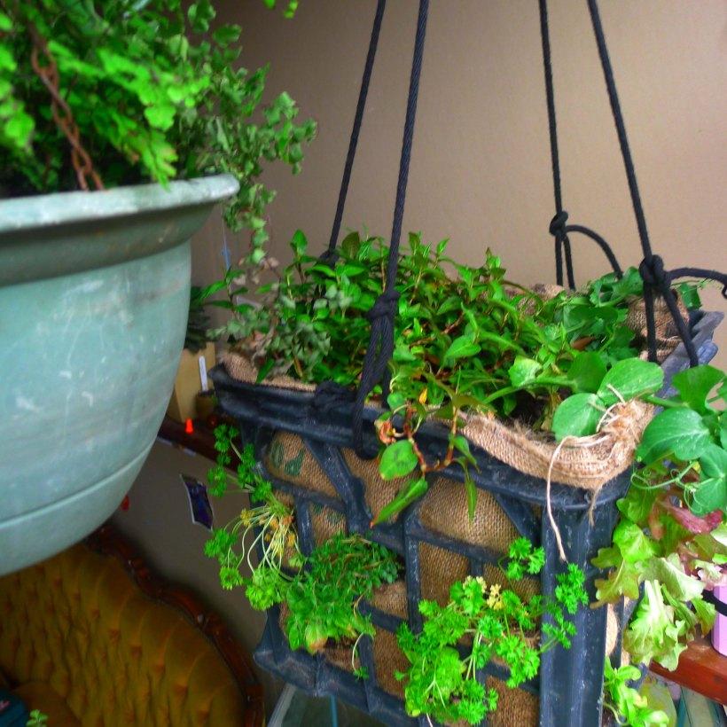 milkcrate hanging herb garden