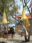 decor hanging datura flowers at eclipse festival