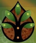 Regen Logo tree of light http://www.re-gen.org.au/