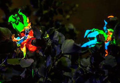 These flowers are made by Zac who melts PET bottles and then paints them with UV reactive paint!